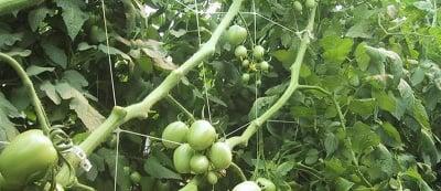 Поддържаща мрежа за зеленчуци h153