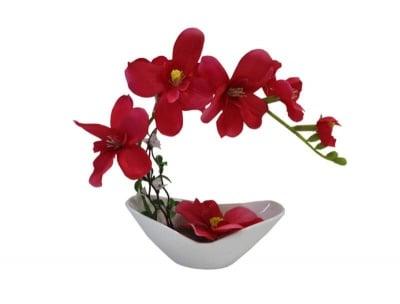Декоративна орхидея - различни цветове