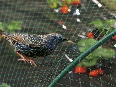 Мрежа срещу птици Birdnet 4x5 зелена