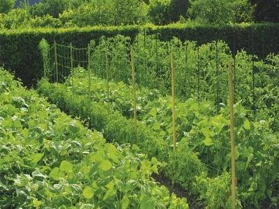 Мрежа за краставици Trellinet 1.7x10 м.