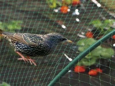 Мрежа срещу птици Birdnet 4x10 зелена
