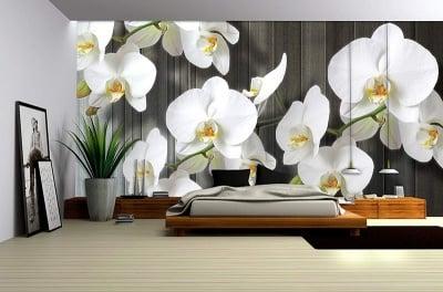 Фототапет Бяла орхидея