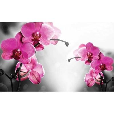 Фототапет Орхидеи
